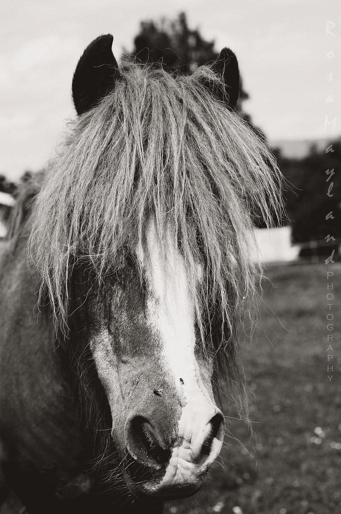 Horse 3 5 bis