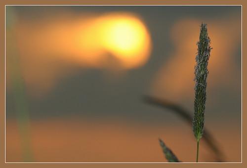 sunset sun nature backlight denmark nikon dusk nikond5000 bestcapturesaoi blinkagain