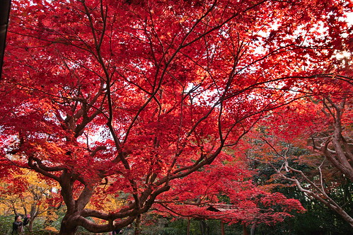 【写真】2012 紅葉 : 厭離庵/2020-10-15/IMGP7831