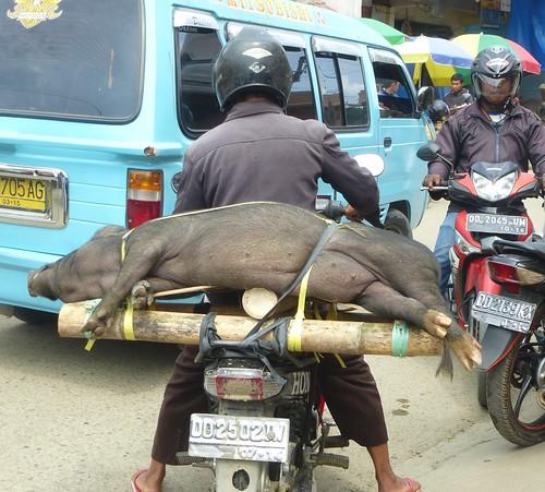 Sulawesi13-Makale (1)