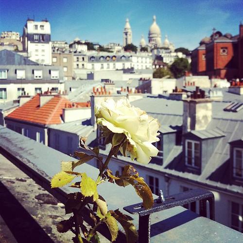 En tapper ros på balkongen.