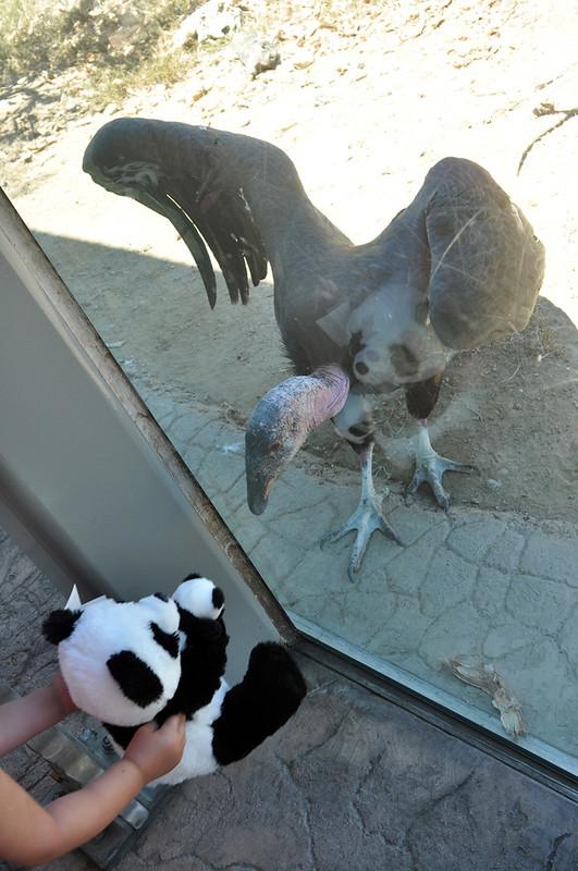 San Diego Zoo #10