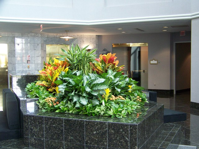 providing distinctive indoor office plants exterior containers and amazing holiday decor to hundreds of offices throughout greater cincinnati amazing office plants