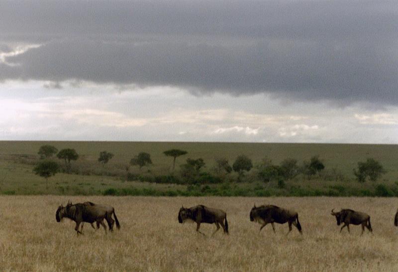 Kenia2002-07-17
