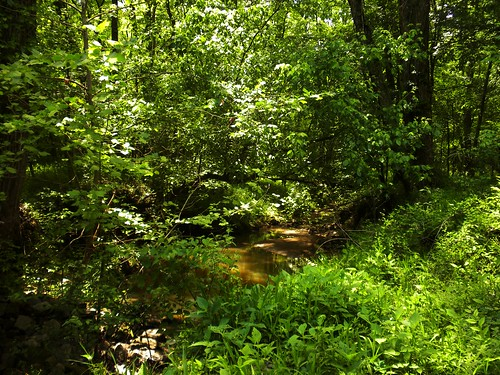 trees shadow sc nature water birds creek ilovenature see woods stream quiet natural bright foliage flowing piedmont gurgle gurglw