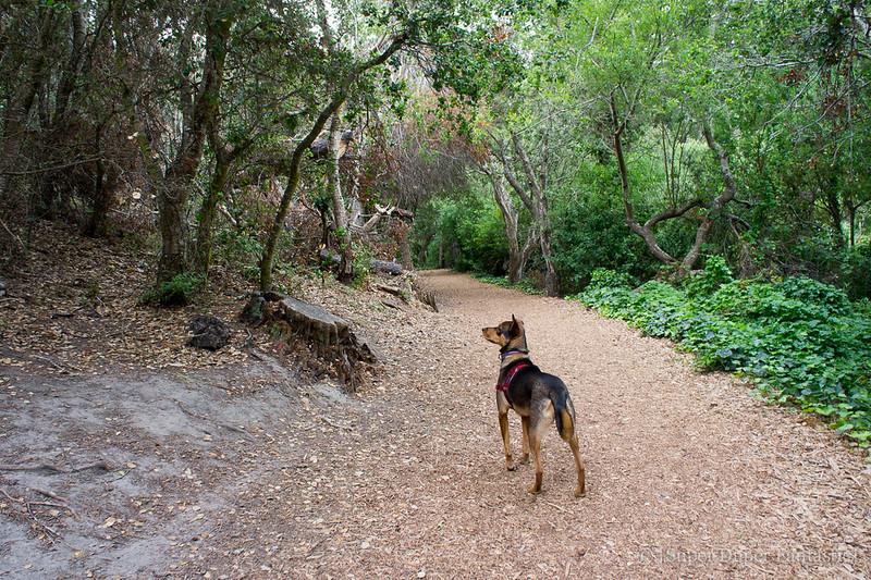 Dog-friendly Carmel