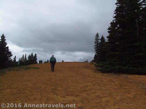 Ascending Red Hill - the cinders will turn from yellow to red atop the hill, Mt. Hood National Forest, Oregon
