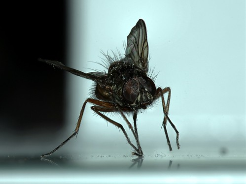 The FLY (Jeff)