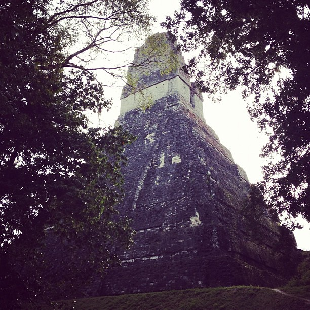 At this point, a group of monkeys was above our heads, in #tikal #guatemala