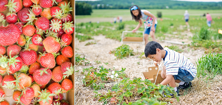 Berry Farm Diptych