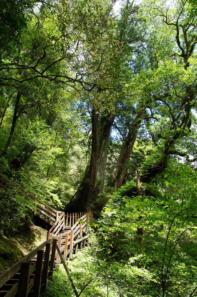 巨木群,與往拉拉山的路上-030