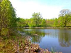 Favorite Pond