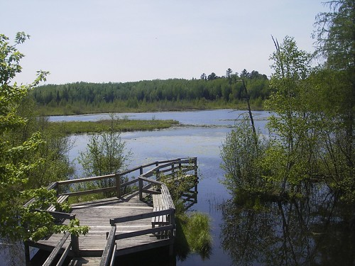 Beaver Pond Overlook