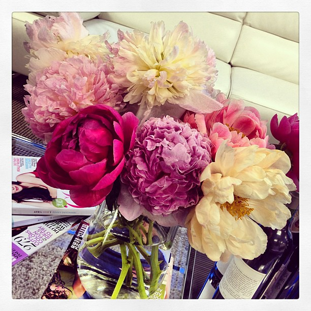 Why are #peonies so amazing? #flowers #spring #pretty #pink #nature #instagood #igdaily #beauty #flora