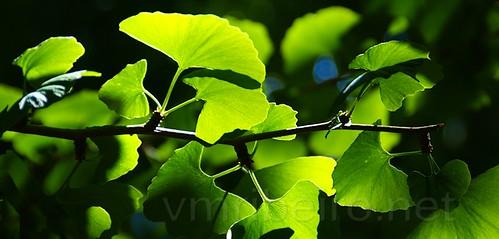Green by VRfoto