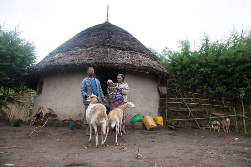 Smallholder family and their sheep in Doyogena