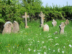 the Shotesham St Mary dead