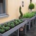 Herb garden-potager
