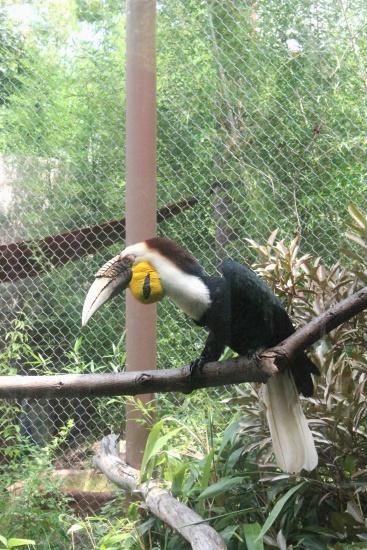 Atlanta Zoo '13, 12