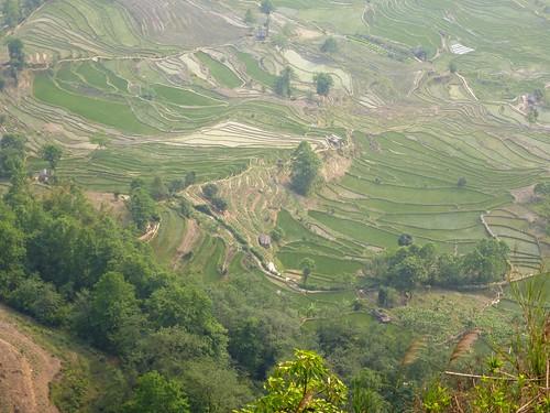 Yunnan13-Yuanyang 23-Laohuzui (15)