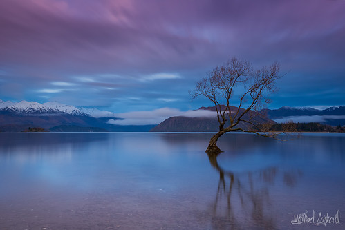 longexposure newzealand reflection water beautiful clouds sunrise canon landscape movement southisland colourful lakewanaka leefilters 5dmkiii leebigstopper wanakatree