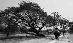 深調,漫步 ~ Elephant riding @ Wat Phra Ram วัดพระราม  帕蘭寺,Ayutthaya~