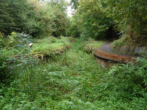 Overgrown Start to Canal