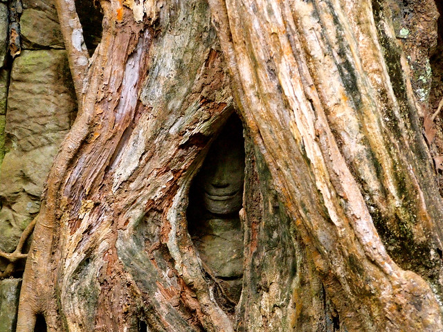 Hidden buddha at Ta Prohm temple in Cambodia