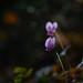 Fall flowers.. by mucahidefendi