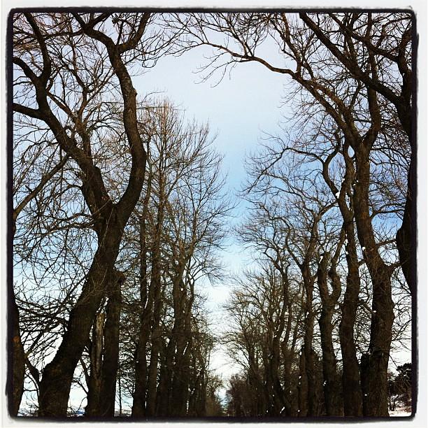 Fine trær