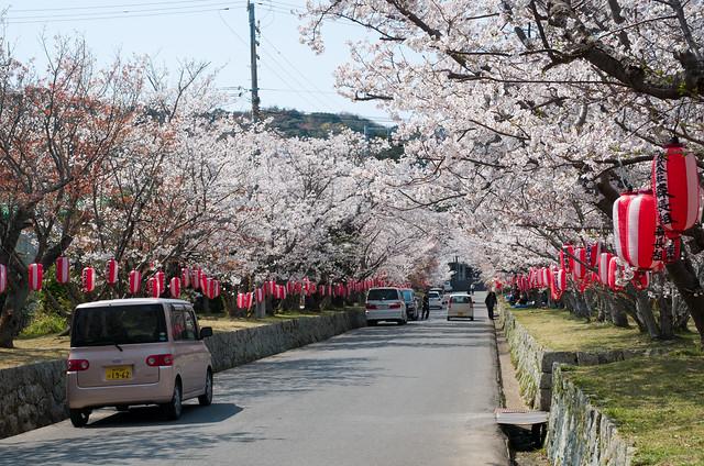 賀集八幡神社 桜並木
