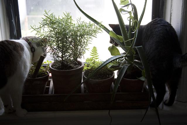 cats + window garden