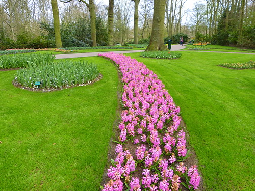 HOLLANDE - Flowers from Keukenhof