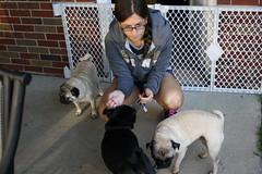 puppy(0.0), street dog(0.0), animal shelter(0.0), animal(1.0), dog(1.0), pet(1.0), mammal(1.0), pug(1.0),