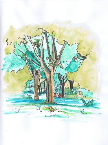 2012-06 árvore jardim