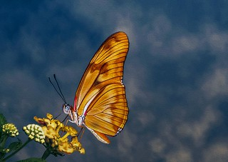 The butterfly counts not months but moments.....