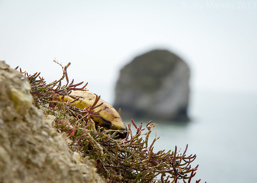 Between a Rock and a Banana