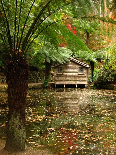 autumn lake fern color colour reflection reflections landscape pond landscaping australia melbourne victoria autumnleaves sherbrooke vic boathouse olinda treefern boatshed dandenongs burnhambeeches dandenongranges thedandenongs alfrednicholasgardens alfrednicholasmemorialgardens phunnyfotos