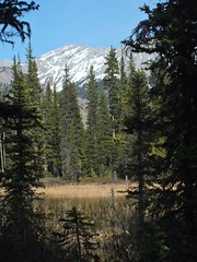 Kananaskis Marsh and Forest