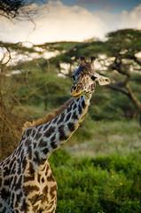 Tanzania-Masek-SafariDrive-45