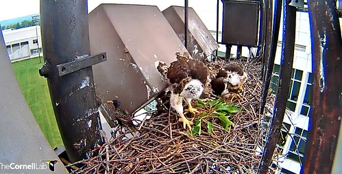 D3 is monitoring starling traffic 5-29-13
