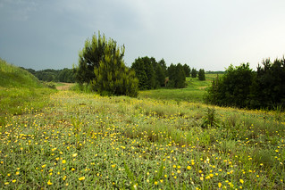 The meadow before storm