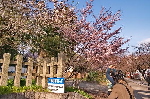 【写真】2013 桜 : 平野神社/2021-01-09/IMGP8701