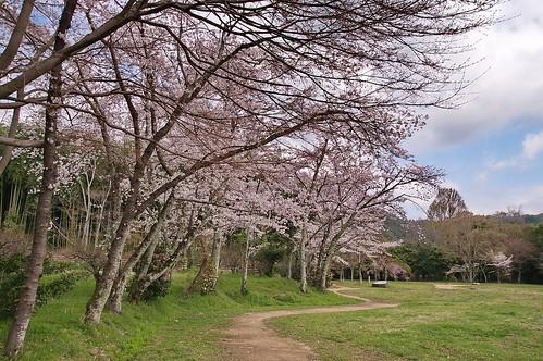 【写真】2013 桜 : 大覚寺/2020-09-15/IMGP9428