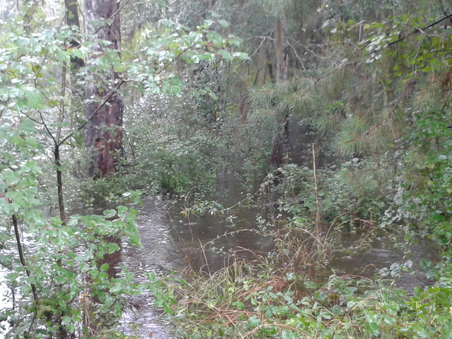 Withlacoochee River at Camp Tygart 2013-07-08