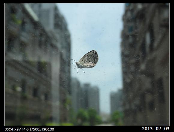 20130703_Butterfly