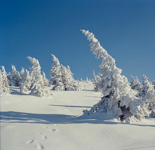 snow film analog day poland polska śnieg ektar szrenica epsonv750 kodakektar100 fujifilmgf670 gf670 f0213 negfix8 tetenal2bathkit