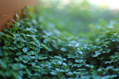 leaf, sunlight, plant, nature, flora, green, produce, close-up, non-vascular land plant,