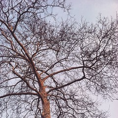 #april #tree #nature #Sky #branches #spring #pa #philly #picoftheday