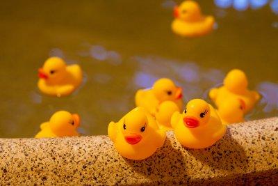 c_furo-duck